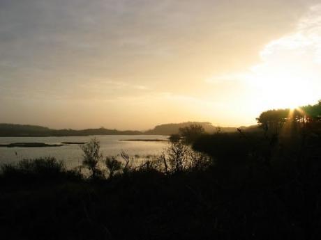 Vogelmeer