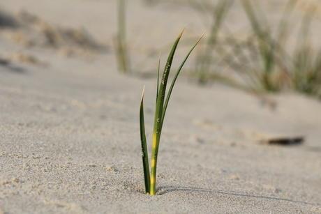 Zandzegge, Berkheide