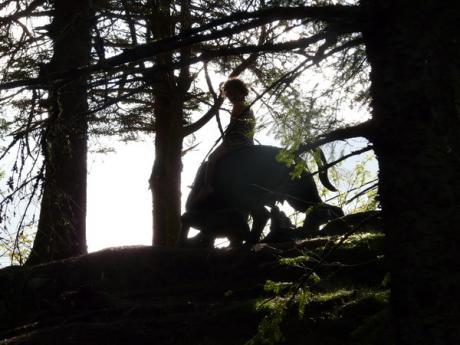 In het donkere woud